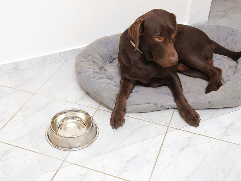 PET-Platten
